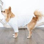 画像5: 綿麻シャンブレーストライプシャツ(ホワイト×ネイビー) (5)