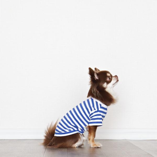画像1: UVカット生地のボーダーTシャツ(スカイブルー×オフホワイト) (1)