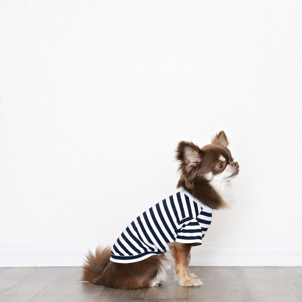画像1: UVカット生地のボーダーTシャツ(ネイビー×オフホワイト) (1)